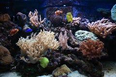 De achtergrond van het aquarium royalty-vrije stock afbeeldingen