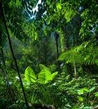 De achtergrond van het avontuur. Groene wildernis Royalty-vrije Stock Afbeeldingen