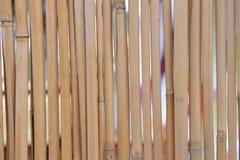 De achtergrond van het bamboe. Stock Afbeeldingen