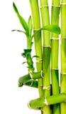 De achtergrond van het bamboe die op wit wordt geïsoleerd Royalty-vrije Stock Foto