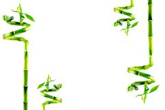 De achtergrond van het bamboe met exemplaarruimte royalty-vrije stock foto's