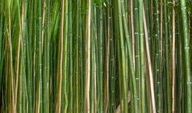 De Achtergrond van het bamboeriet met Groen Stock Foto's