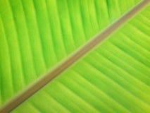 De achtergrond van het banaanblad Stock Fotografie