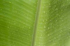 De achtergrond van het banaanblad royalty-vrije stock fotografie