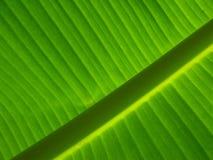 De achtergrond van het banaanblad Stock Foto