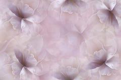 De achtergrond van het bloemen roze-viooltje De purper-witte grote tulp van bloemblaadjesbloemen bloemencollage De samenstelling  royalty-vrije stock afbeeldingen