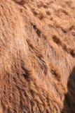 De Achtergrond van het Bont van de ezel Royalty-vrije Stock Afbeeldingen
