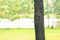 De achtergrond van het boomonduidelijke beeld in park van Thailand Stock Afbeeldingen