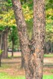 De achtergrond van het boomonduidelijke beeld in park van Thailand Stock Foto's