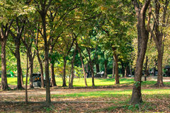 De achtergrond van het boomonduidelijke beeld in park van Thailand Stock Foto