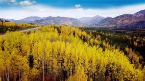 De achtergrond van het dalingsseizoen met gele espbomen stock videobeelden