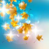 De achtergrond van het de herfstontwerp. Stock Foto's