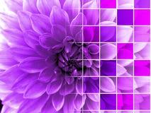 De Achtergrond van het de Stijlbehang van bloemcontroleurs Stock Fotografie