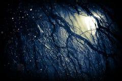 De achtergrond van het de winterweer Stock Afbeelding