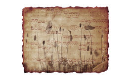 De achtergrond van het document met muziek en bloemen Stock Foto