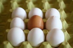 De achtergrond van het ei Royalty-vrije Stock Afbeeldingen