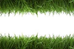 Kaderachtergrond met groen gras royalty-vrije stock fotografie