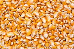 De achtergrond van het graan Stock Afbeelding