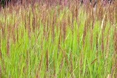 De achtergrond van het gras Royalty-vrije Stock Foto