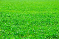 De achtergrond van het gras Royalty-vrije Stock Fotografie