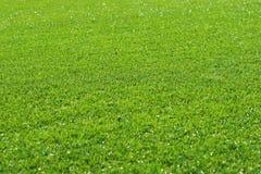 De Achtergrond van het gras Royalty-vrije Stock Afbeeldingen