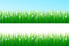 De achtergrond van het gras Royalty-vrije Stock Foto's