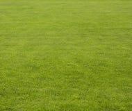 De achtergrond van het gras Stock Fotografie