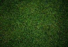 De achtergrond van het gras Royalty-vrije Stock Afbeelding