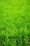 De achtergrond van het gras Stock Foto