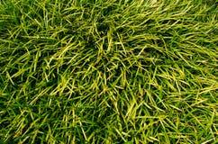 De achtergrond van het gras Stock Afbeelding