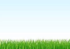 De achtergrond van het gras en van de hemel Stock Afbeeldingen