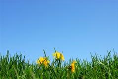 De achtergrond van het gras en van de hemel Royalty-vrije Stock Afbeelding