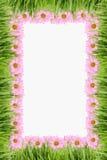 De achtergrond van het gras en van het madeliefje vector illustratie