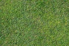 De Achtergrond van het Gras van de Bermudas Royalty-vrije Stock Fotografie