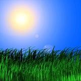 De achtergrond van het gras in zon Stock Foto's