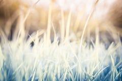 De achtergrond van het grasblad Stock Afbeeldingen