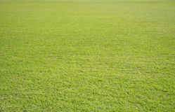 De achtergrond van het grasveldgebied Stock Foto