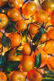 De achtergrond van het Kerstmisnieuwjaar van mandarijnen en brandende slingers Stock Foto's