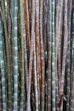 De achtergrond van het kleurenbamboe, behang, bamboeboomstammen in een bosje in Chaingmai Thailand Azië royalty-vrije stock foto