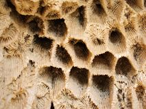 De achtergrond van het koraal royalty-vrije stock afbeeldingen