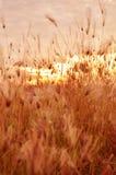 De achtergrond van het ochtendgebied met wilde bloemen Stock Afbeeldingen