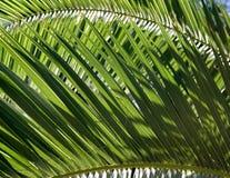 De achtergrond van het palmblad stock fotografie