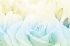 De achtergrond van het rozenboeket Stock Afbeeldingen