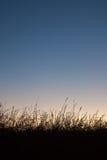 De achtergrond van het silhouetgras Stock Fotografie