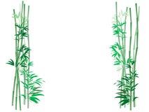 De Achtergrond van het Struikgewas van het bamboe Royalty-vrije Stock Foto