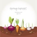 De achtergrond van het tuinbed Stock Fotografie