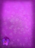 De Achtergrond van het viooltje Stock Afbeelding