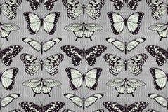 De achtergrond van het vlinderpatroon Stock Afbeelding