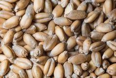 De achtergrond van het voedsel Stock Afbeelding