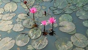 De achtergrond van het water met leliebloem Royalty-vrije Stock Afbeelding